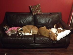 Left to right: Roxy, Dakota, Kali and Ernie