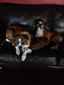 Roxy and Dakota