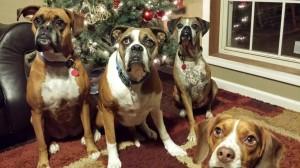Kali, Dakota, Roxy, Ernie